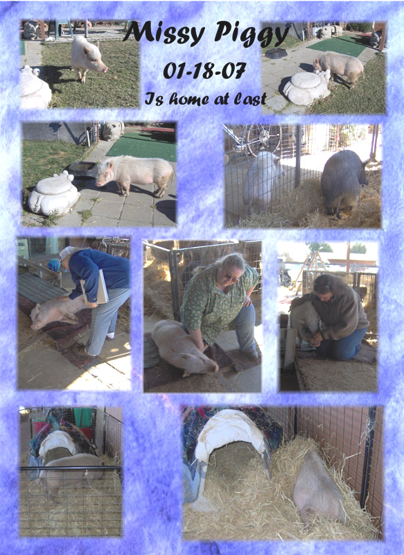 Cuddly_Critters_Potbellied_Pig_Sanctuary_Hollister_,_California